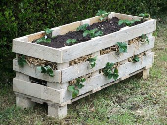 strawberry pallet planter shed interior ideas
